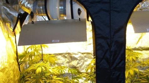 Marihuana Growzelt
