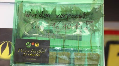 Marihuana Stecklinge in Versandbox