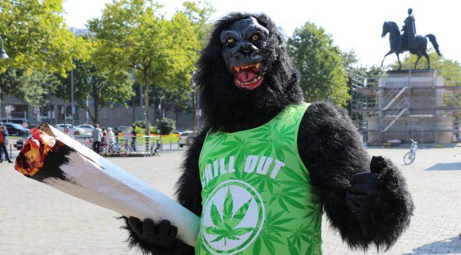 Aktivistenproblem – wenn Hanf-King-Kong Marihuana entführt